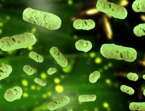 Le détartrage biologique d'ALSBOM : des bactéries performantes